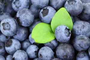Prøv også Blåbær, amerikanske eller hageblåbær.