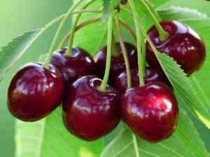 Prøv også Kirsebær, rå.