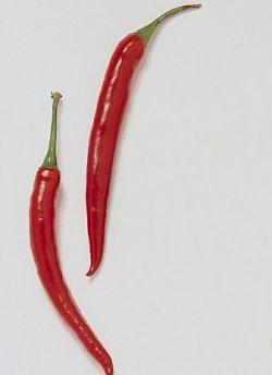 Bilde av Chili, rød.