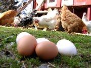 Prøv også Eventyrsmak Økologiske egg - 30 stk. Brett.